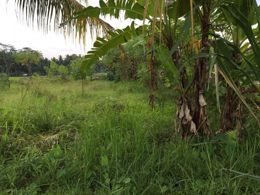 Tanah sawah untuk sewa di Petulu-Ubud