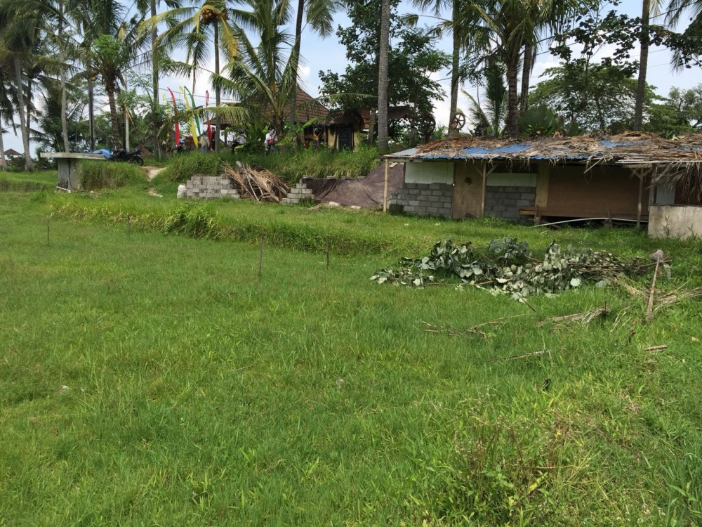 Nice view of ricefield and jungle land for lease in sokwayah-ubud