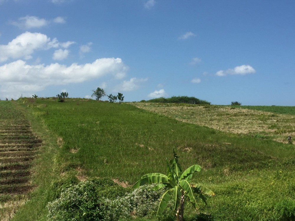 Ocean View 28 Are Freehold Plot for Sale in Tabanan - Reduced Price