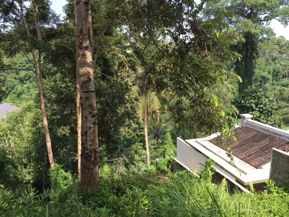 beautiful viewland for lease in Bangkiang Sidem-Kliki,Ubud