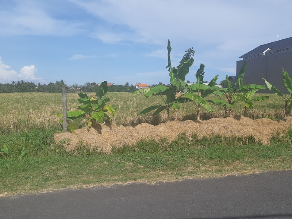 Prime Small Plot for Lease 4,5 Are