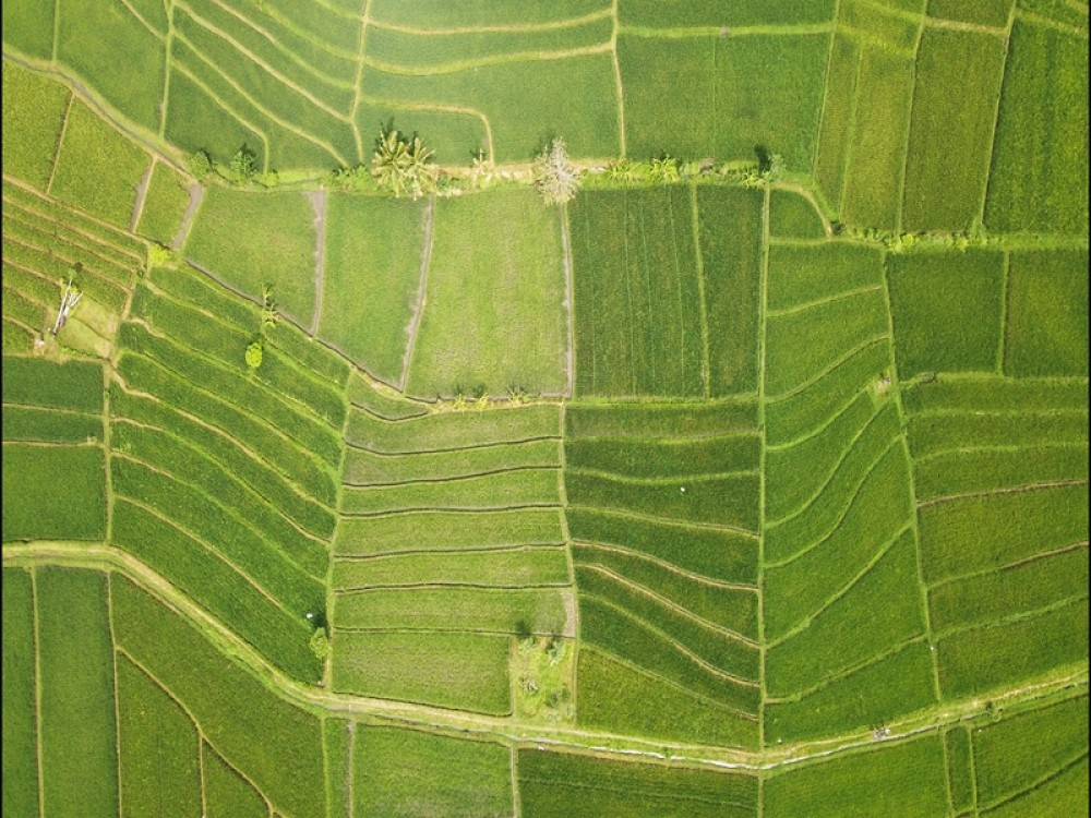 Great Rice Paddies View 35 Are in Prime Location