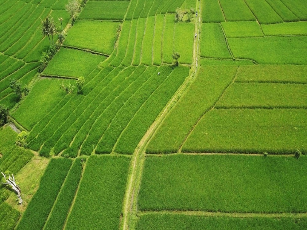 Rice Paddy View Land in Nyanyi for Sale