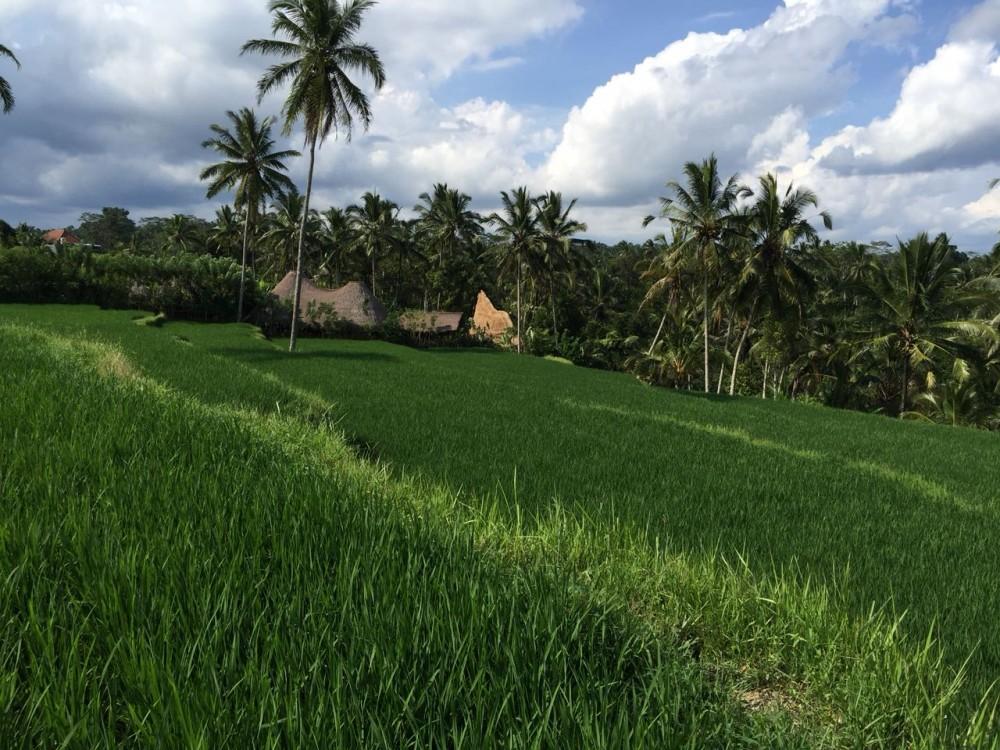 amazing land close to ceking riceterras-tegalalang ubud