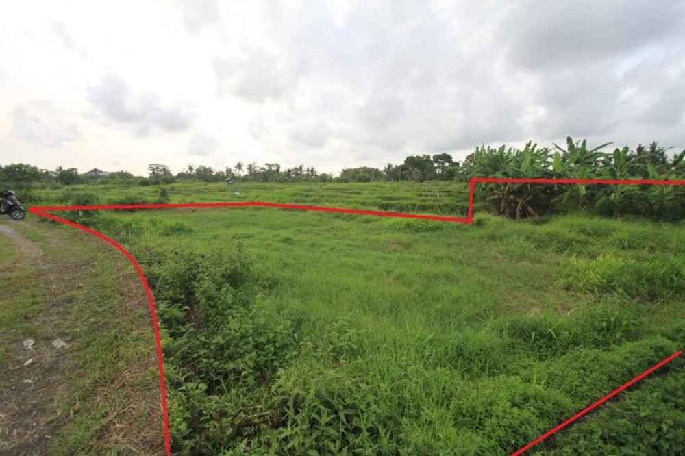 Amazing Rice Paddy View Land for Sale
