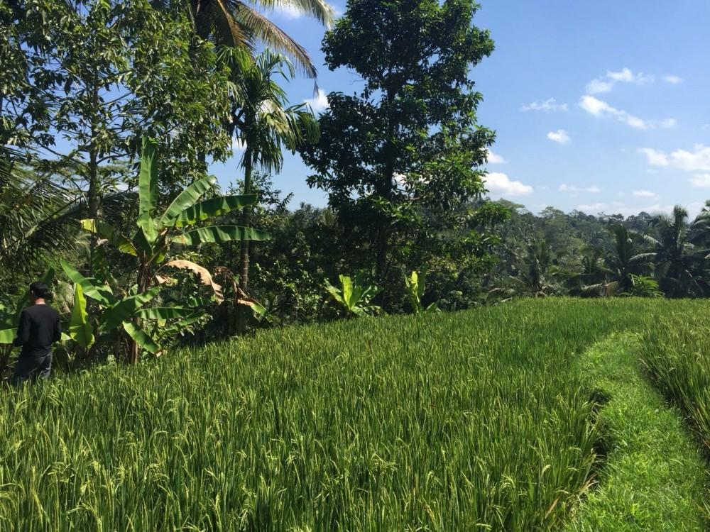 Belle vue terrain à vendre à tegalalang gianyar