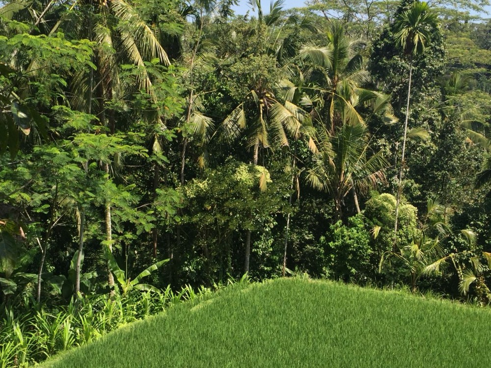 Nice view land for sale in tegalalang gianyar