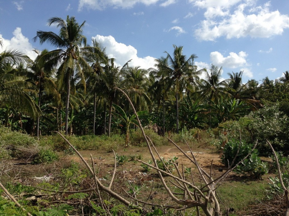 Beautiful 53.5 Are Residential Beachfront Land for Sale - REDUCED PRICE
