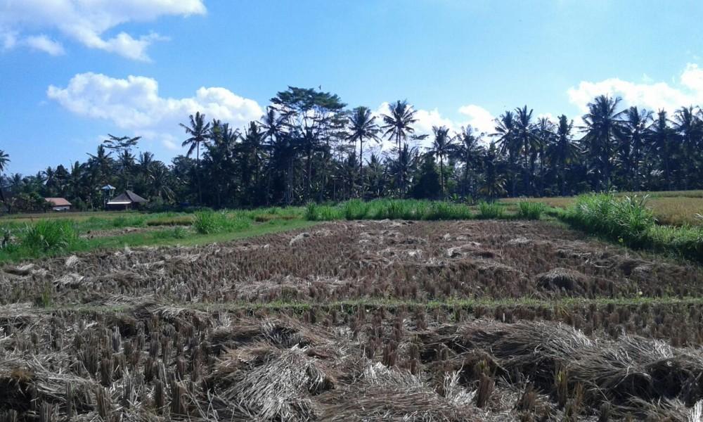 Belle opportunité de construire votre villa de rêve à Ubud