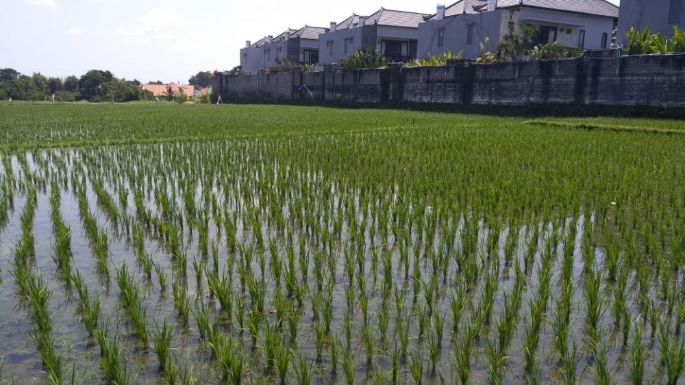 26 Are Amazing Land for Lease in Kayu Tulang
