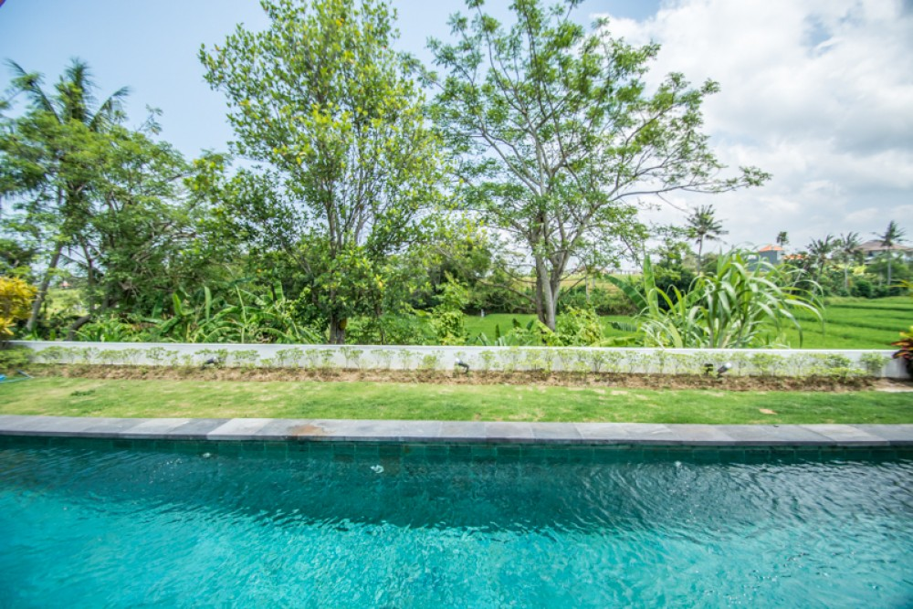 Brand New Three Bedrooms Villa with Rice Paddies View for Sale in Canggu