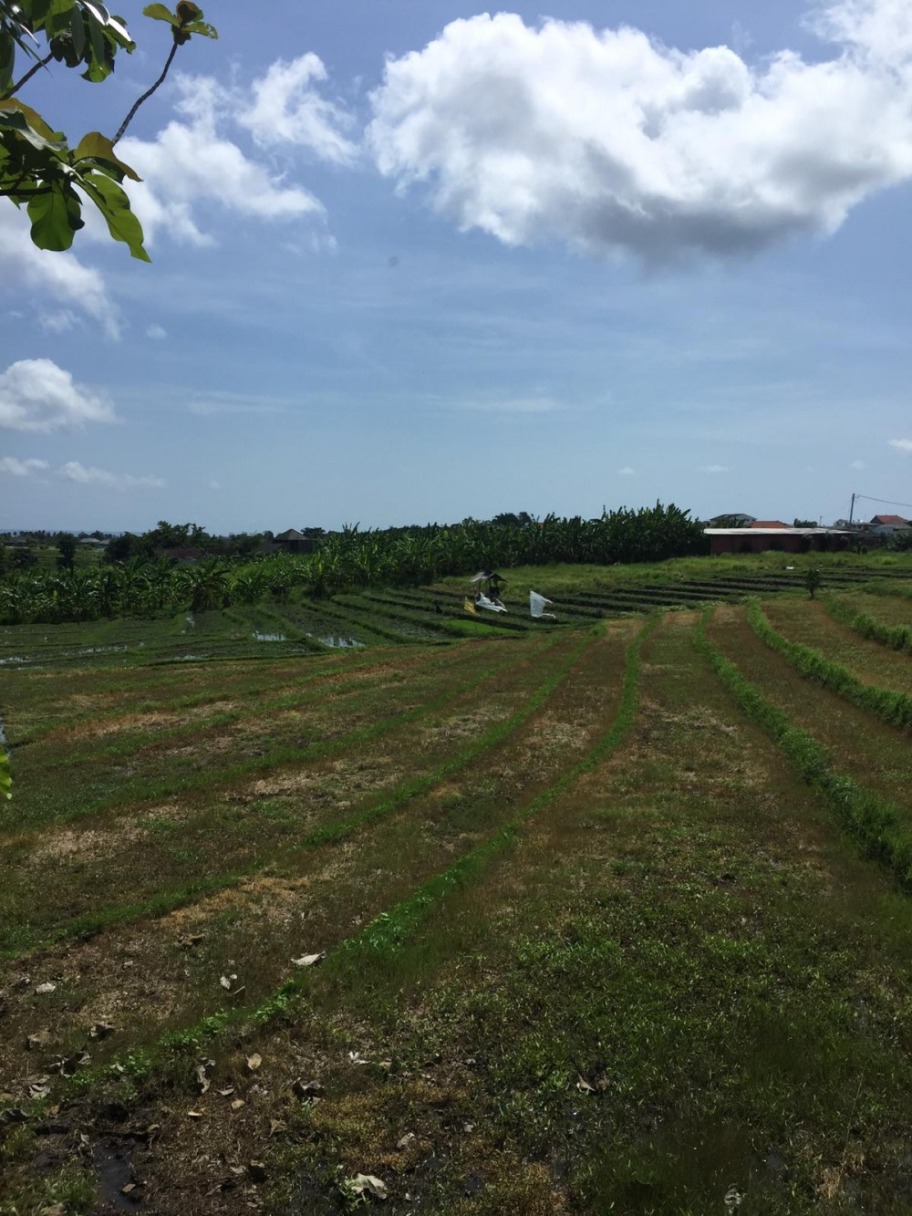 Amazing 13.5 Are Leasehold Land in Central Berawa with Views