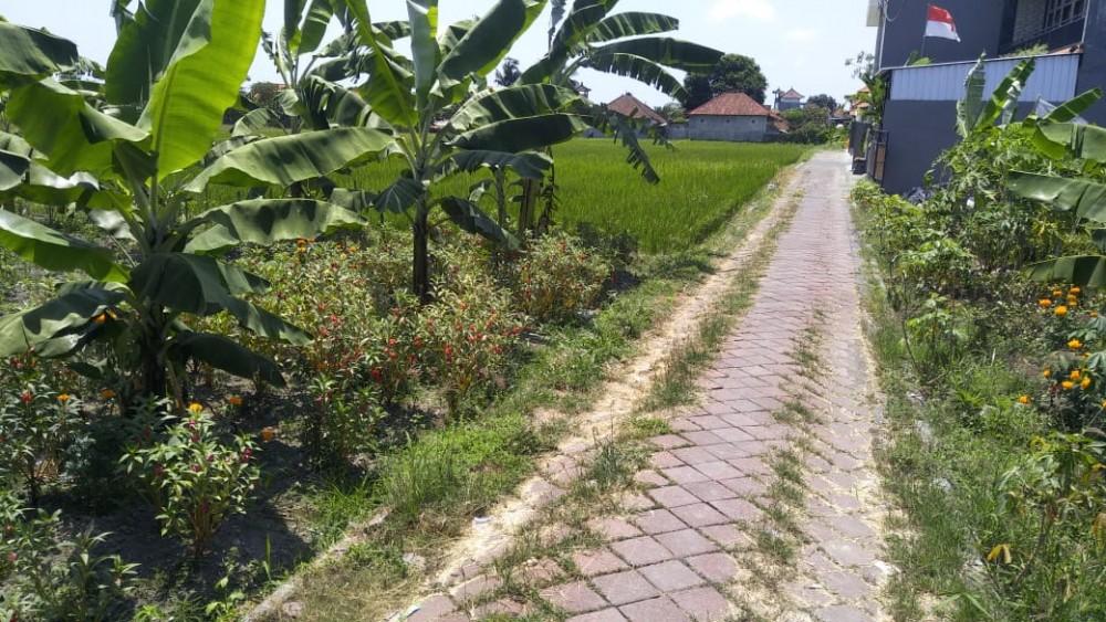 Terrain incroyable à louer à Munggu