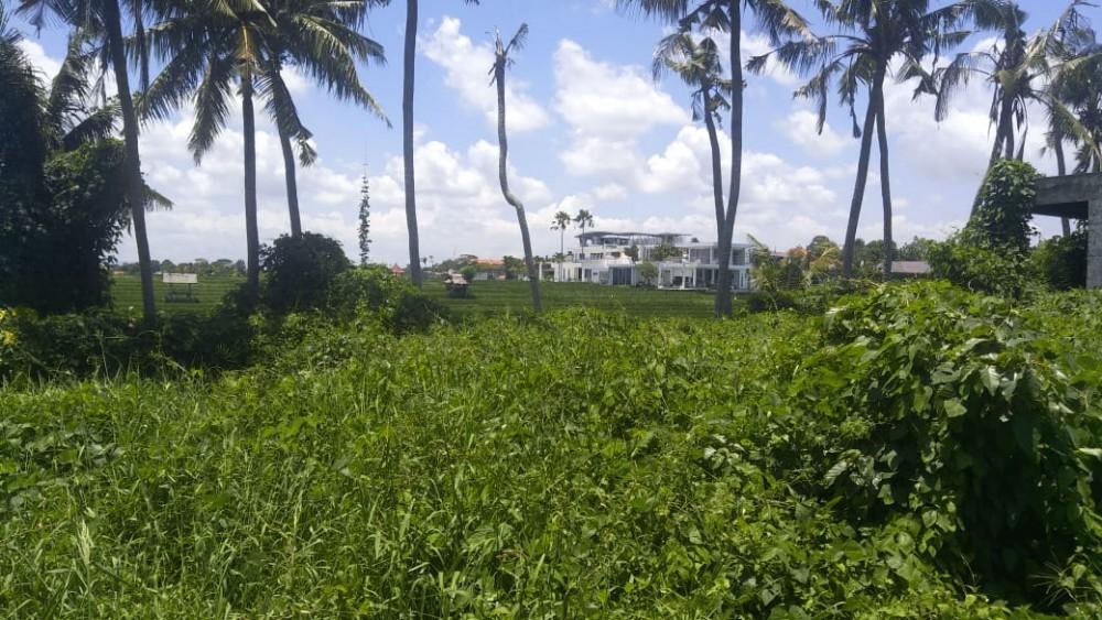 Amazing 6 Are Land à louer avec vue sur la ceinture de verdure