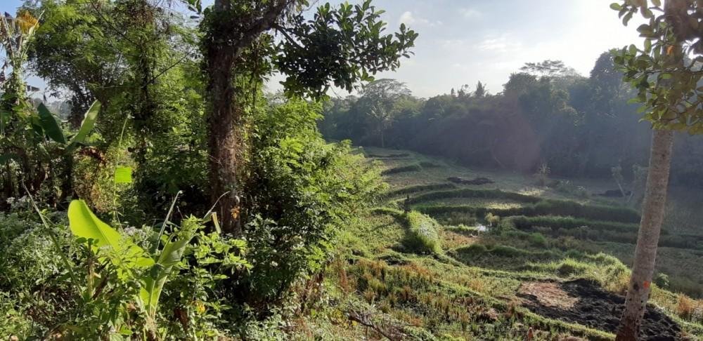 Superbe terrain de rizière 11.5 Are