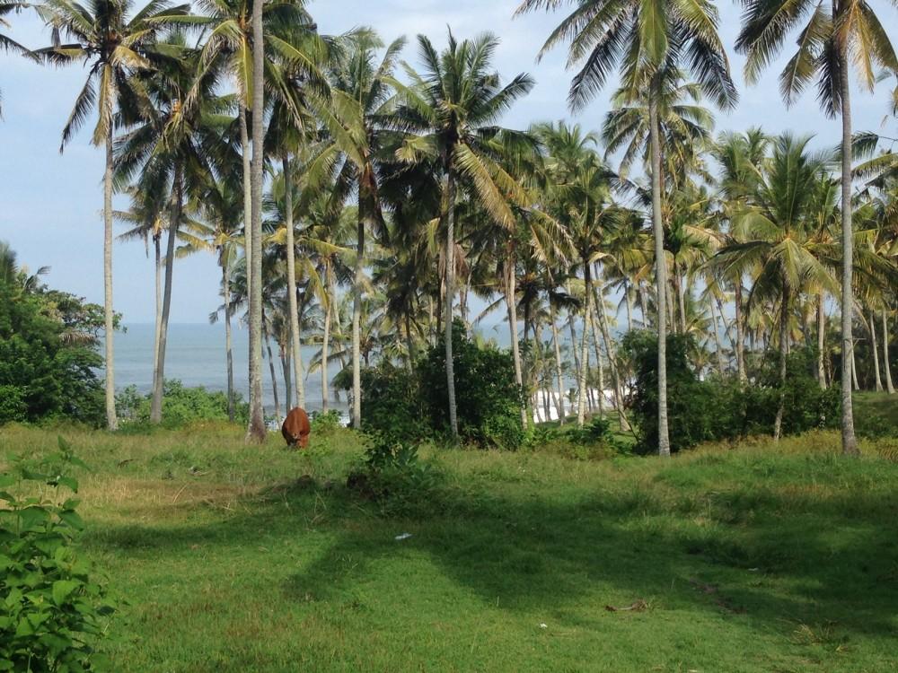 Ideal 4 Are Freehold Plot in Soka Tabanan