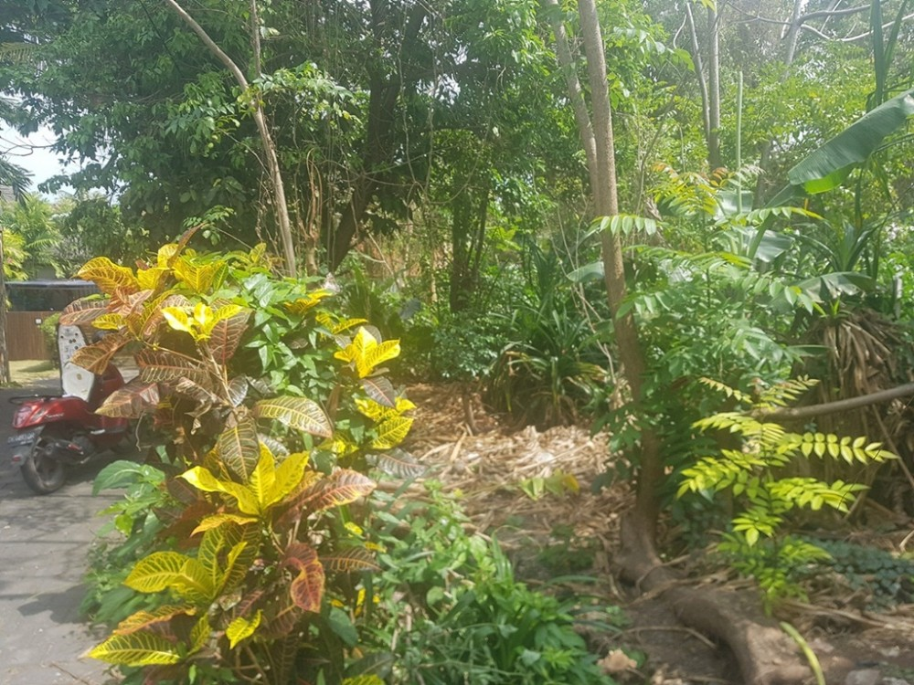 Ideal 6.06 Are Leasehold Plot in Pererenan