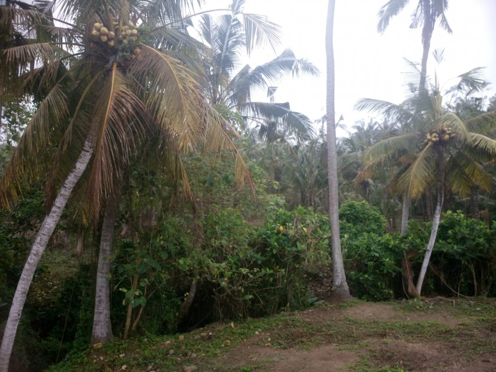 Hot Deals Ocean View of Balian Beach Terrains à vendre