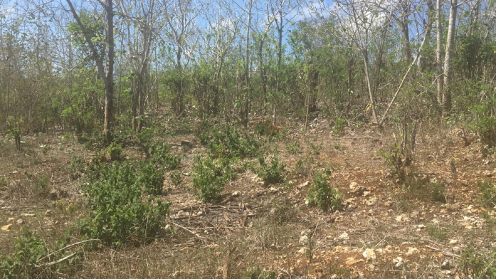 Ocean View Freehold Land for Sale in Ungasan
