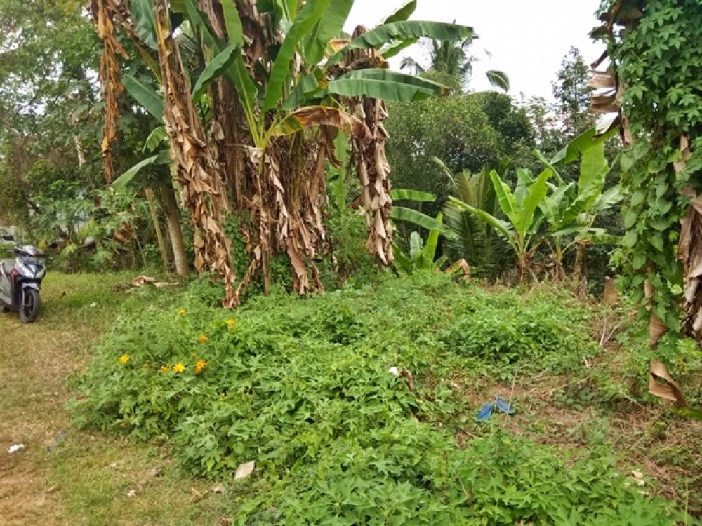 Small Freehold Residential Plot in Tabanan for Sale