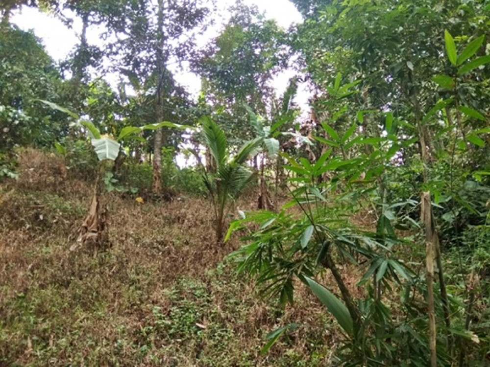 Small Freehold Residential Plot in Tabanan