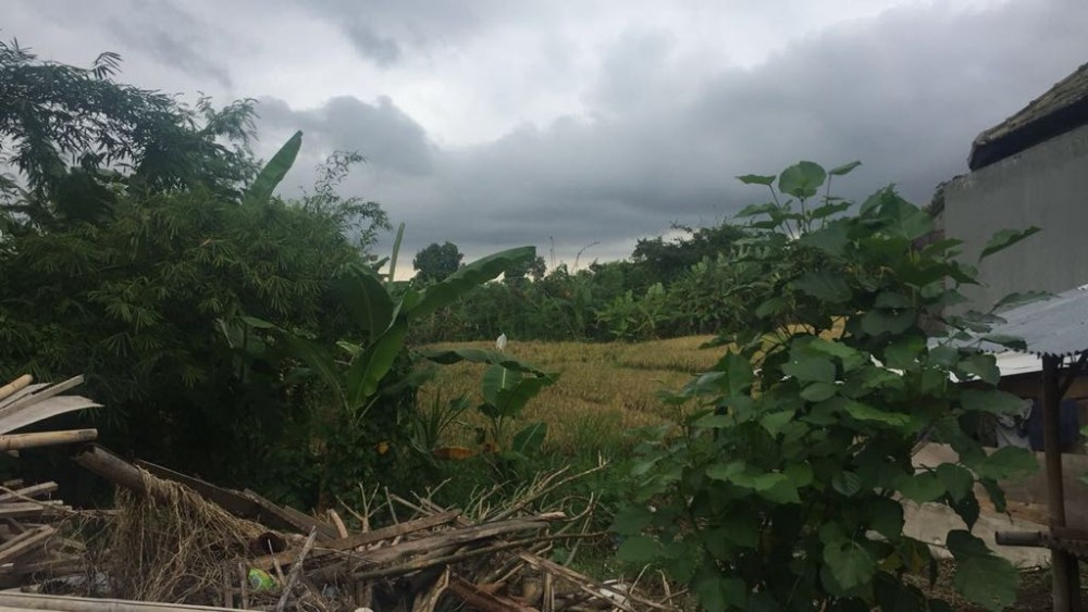 Residential Land with Rice Paddies View for Sale in Berawa