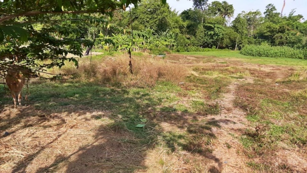Quiet and Good Shape of Land with Good Price