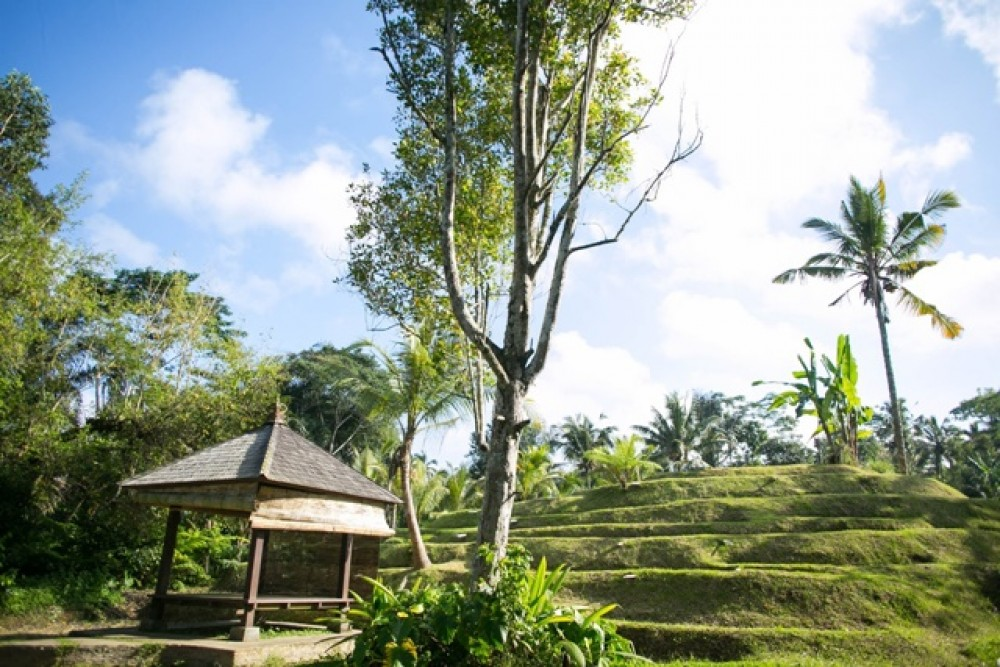 Beautiful Landscape Land in Ubud for Sale