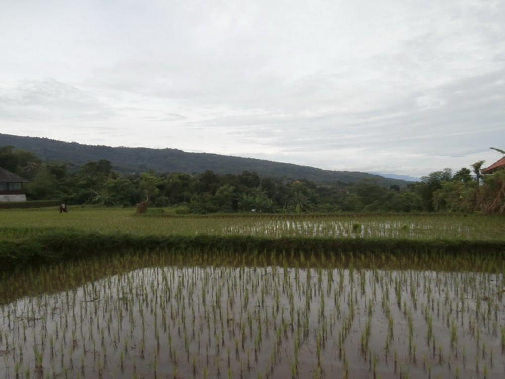 Amazing Landscape Land for Sale