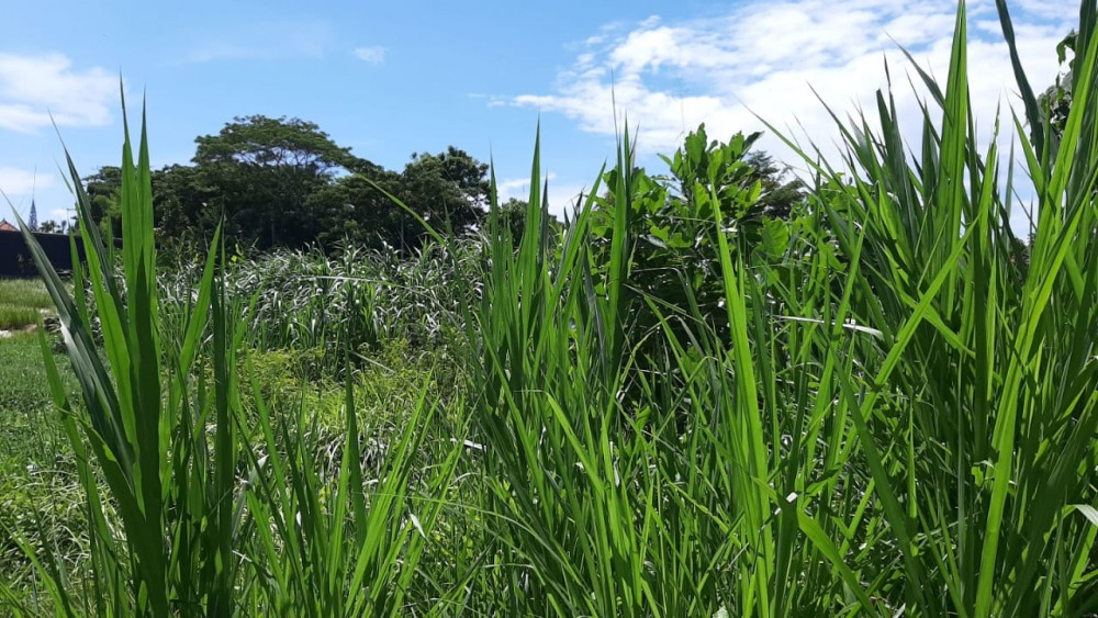 Good Location Land for lease in Berawa