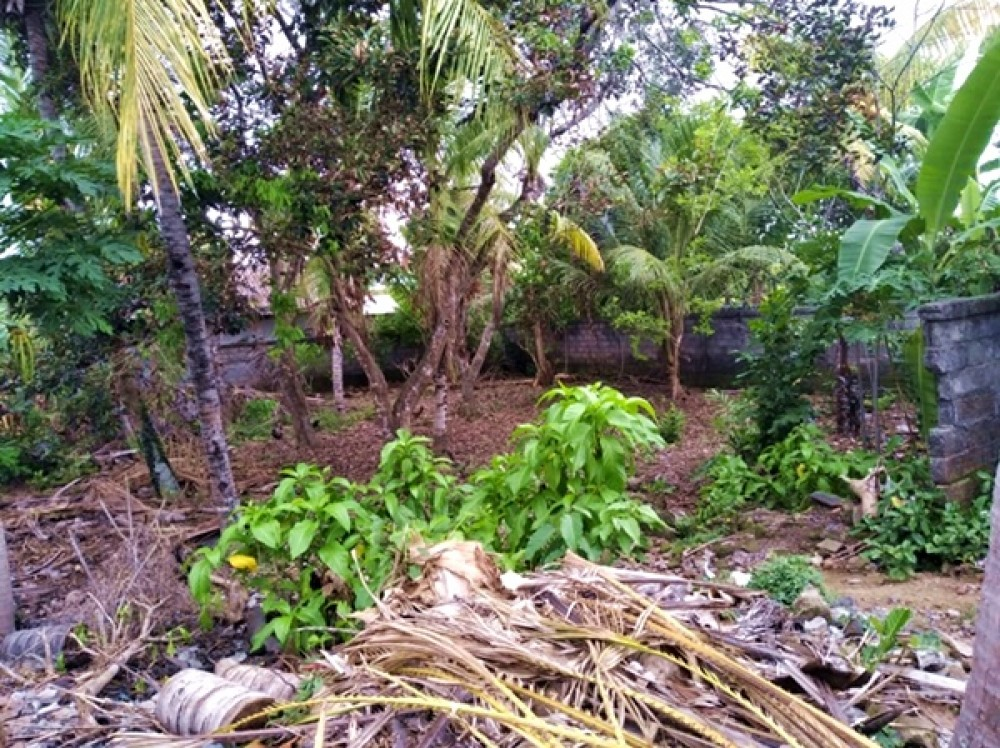 5 Are Leasehold Land in Ubud