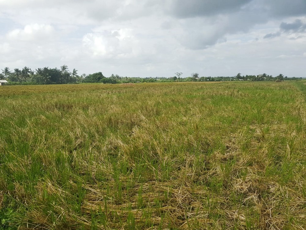 Beautiful Sweeping Freehold Land in Tabanan for Sale