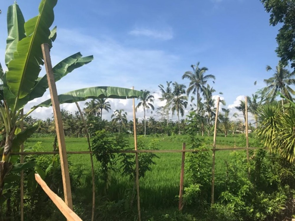 Residential Land with Rice Field View in Ubud for Sale