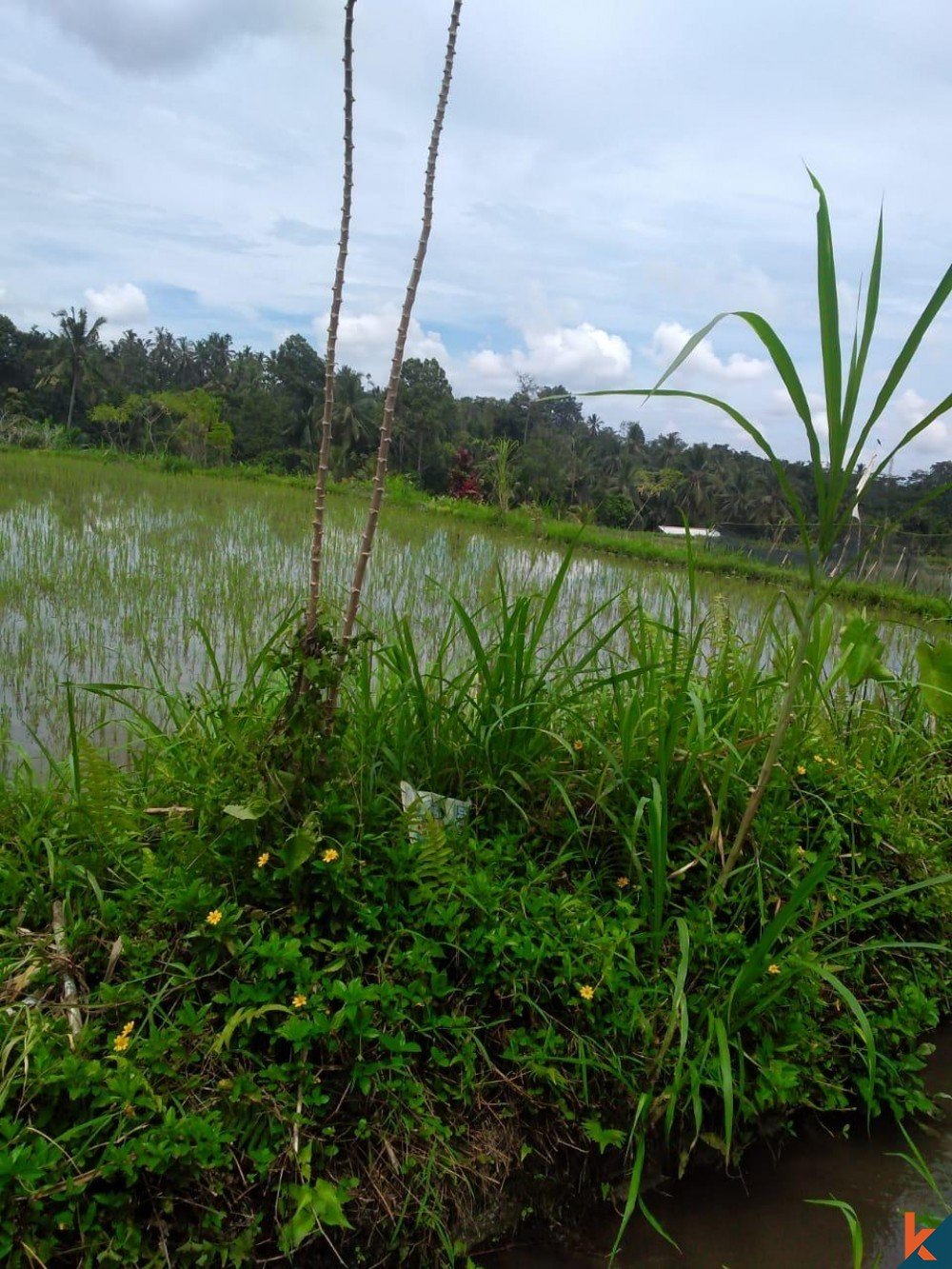 Land with Stunning River View in Tegallalang for Sale