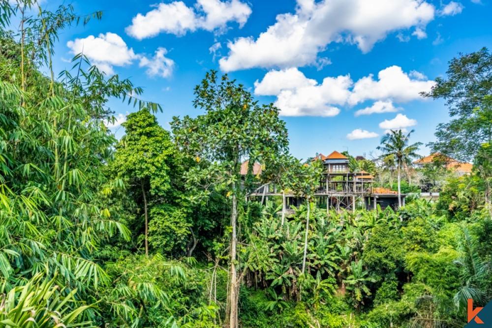 Villa Baru dengan Pemandangan Hutan Dijual di Canggu