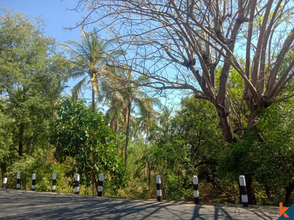 Beachfront Spacious Land for Sale in Singaraja